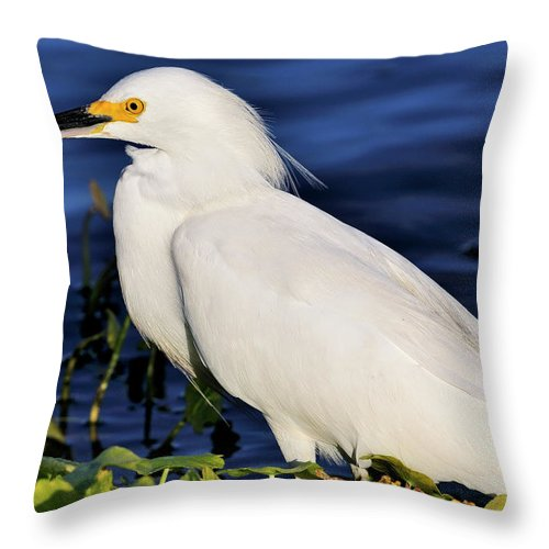 Snowy Throw Pillow featuring the photograph Profile Of A Snowy Egret by Bill Dodsworth
