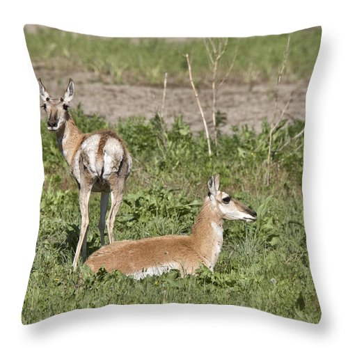 Pronghorn Throw Pillow featuring the photograph Pronghorn Antelope With Young by Mark Duffy