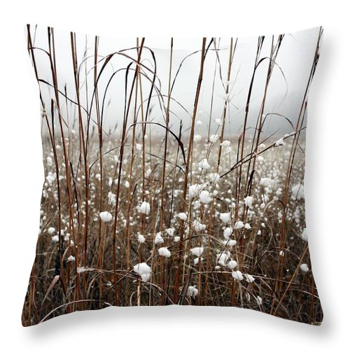 Landscape Throw Pillow featuring the photograph Puffed Wheat by Pat Purdy