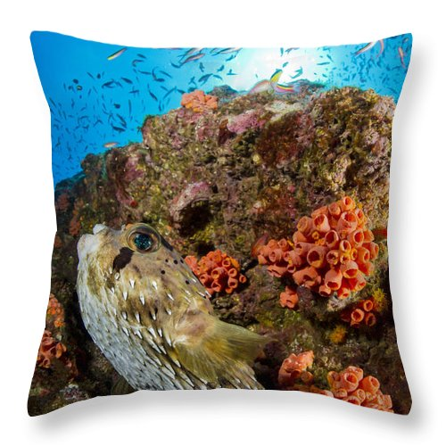 El Bajo Throw Pillow featuring the photograph Pufferfish And Reef, La Paz Mexico by Todd Winner