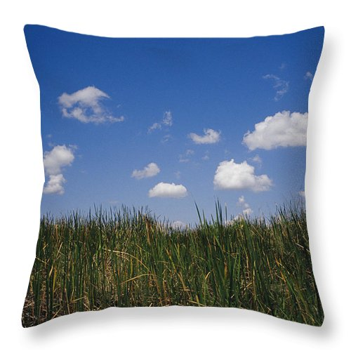 North America Throw Pillow featuring the photograph Puffy Clouds Fill A Blue Sky Over Tall by Raul Touzon