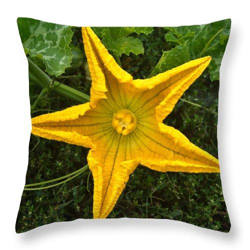 Pumpkin Throw Pillow featuring the photograph Pumpkin Flower 1 by Douglas Barnett