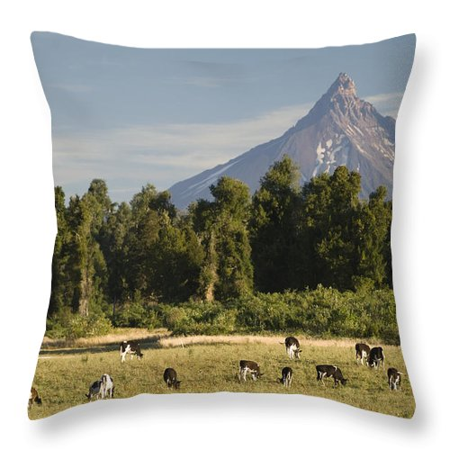 Puyehue National Park Throw Pillow featuring the photograph Puntiagudo Volcano In The Background by Abraham Nowitz