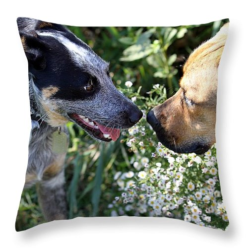 Puppies Throw Pillow featuring the photograph Puppy Love by Elizabeth Winter