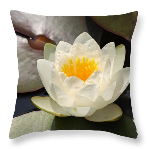 Waterlily Throw Pillow featuring the photograph Pure by Katherine White