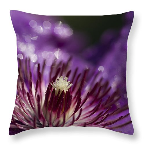 Clematis Throw Pillow featuring the photograph Purple Clematis And Bokeh by Kathy Clark