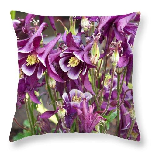 Flower Throw Pillow featuring the photograph Purple Columbine by Corinne Elizabeth Cowherd