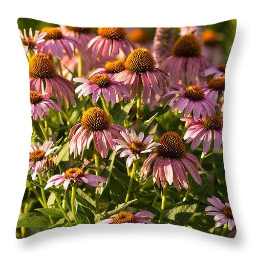Prairie Throw Pillow featuring the photograph Purple Coneflower by Steve Gadomski