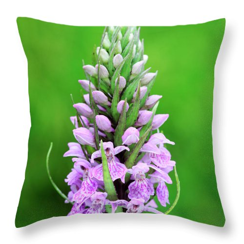Orchis Mascula Throw Pillow featuring the photograph Purple Early Morning Orchid by Neil Overy