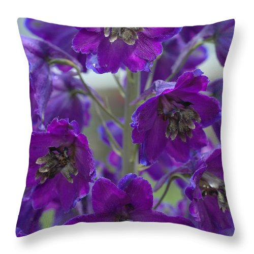 Purple Throw Pillow featuring the photograph Purple Flowers by Mike Nellums