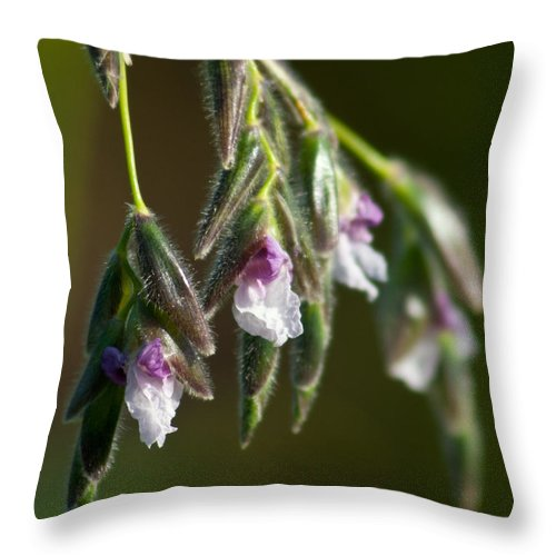 Flower Throw Pillow featuring the photograph Purple Haze by Michelle Constantine
