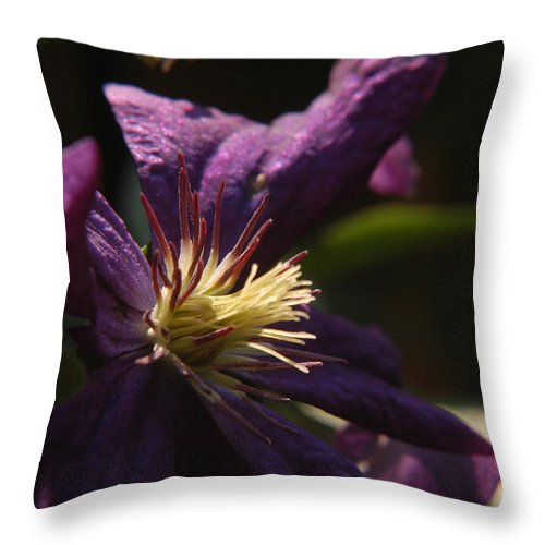 Clematis Throw Pillow featuring the photograph Purple Lady by Wanda Brandon