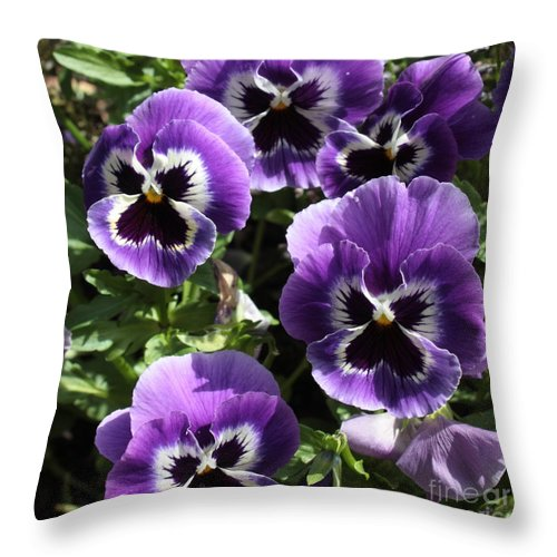Pansy Throw Pillow featuring the photograph Purple Pansies Square by Carol Groenen