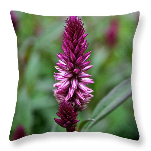 Floral Throw Pillow featuring the photograph Purple Parfait by Susan Herber