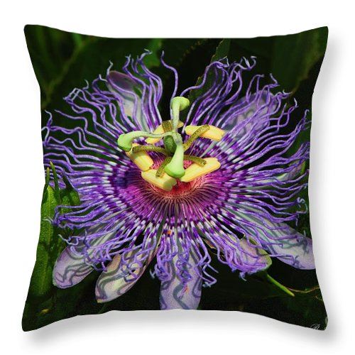 Passion Flower Throw Pillow featuring the photograph Purple Passion by Barbara Bowen