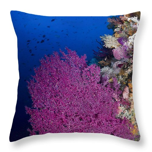 Raja Ampat Throw Pillow featuring the photograph Purple Sea Fan In Raja Ampat, Indonesia by Todd Winner