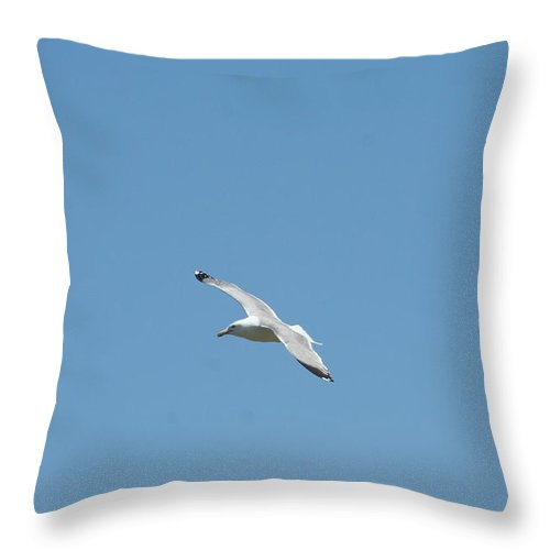 Photography Throw Pillow featuring the photograph Pursuing by Barbara S Nickerson