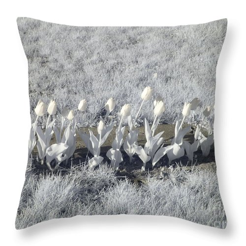Tulips Throw Pillow featuring the photograph Pushing Tulips by Stephanie Kripa