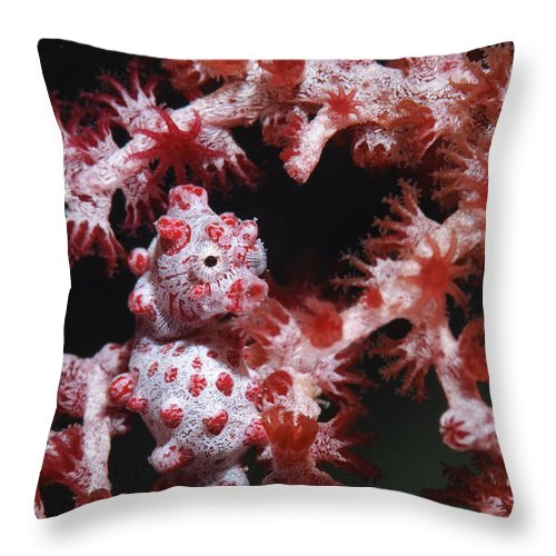 Osteichthyes Throw Pillow featuring the photograph Pygmy Seahorse, Indonesia by Todd Winner