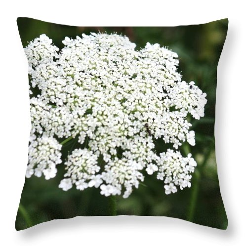 Flower Throw Pillow featuring the photograph Queen Annes Lace by Donna Walsh