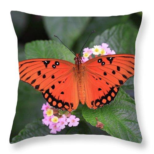 Queen Butterfly Throw Pillow featuring the photograph Queen Butterfly by Rick Berk