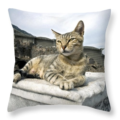 Tabby Throw Pillow featuring the photograph Queen Of Ephesus by Glennis Siverson