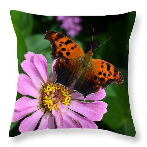 Butterfly Throw Pillow featuring the digital art Question Mark Butterfly And Zinnia Flower by Eva Kaufman