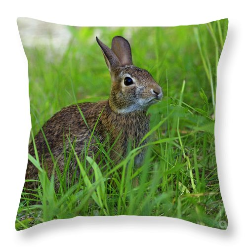 Rabbit Eating Grass In The Forest Throw Pillow featuring the photograph Rabbit Eating Grass In The Forest by Inspired Nature Photography Fine Art Photography