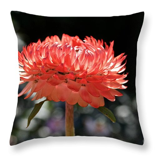 Outdoors Throw Pillow featuring the photograph Radiance by Susan Herber