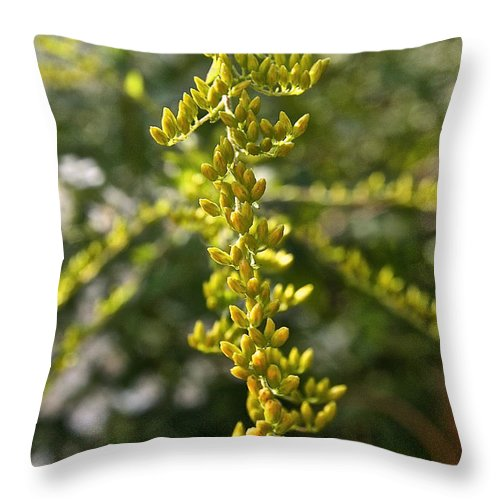 Outdoors Throw Pillow featuring the photograph Rag Weed Tendril by Susan Herber