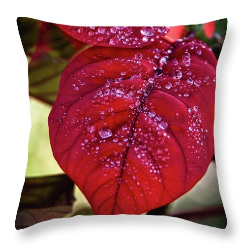 Red Leaves Throw Pillow featuring the photograph Rain Drops On Red Leaves by James Woody