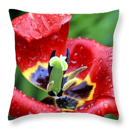 Flower Throw Pillow featuring the photograph Rain Kissed by Teresa Zieba