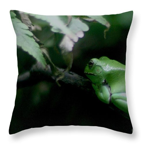 Vacation Throw Pillow featuring the photograph Rainbow Connection by Alan Look