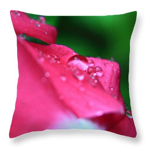 Flower Throw Pillow featuring the photograph Raindrops On A Flower I by Gene Berkenbile