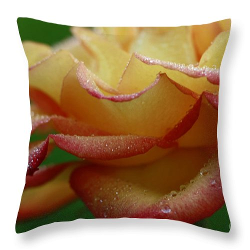 Rain Throw Pillow featuring the photograph Raindrops On Petals by Inspired Nature Photography Fine Art Photography