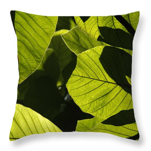 Mp Throw Pillow featuring the photograph Rainforest Leaves Showing Sunlight by Hiroya Minakuchi