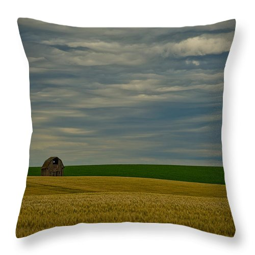 Wheat Throw Pillow featuring the photograph Rainy Day Blues by Dan Mihai