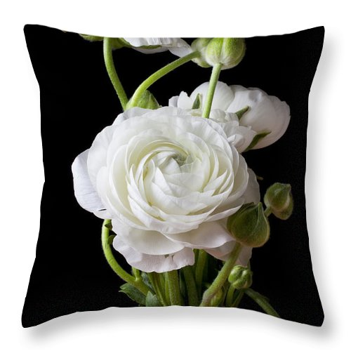 White Ranunculus Flower Red Throw Pillow featuring the photograph Ranunculus In Red Vase by Garry Gay