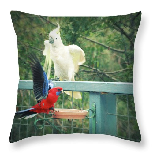 Birds Throw Pillow featuring the photograph Raucous At The Feeding Bowl by Douglas Barnard