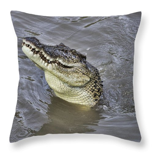 Saltwater Throw Pillow featuring the photograph Ready To Jump by Douglas Barnard