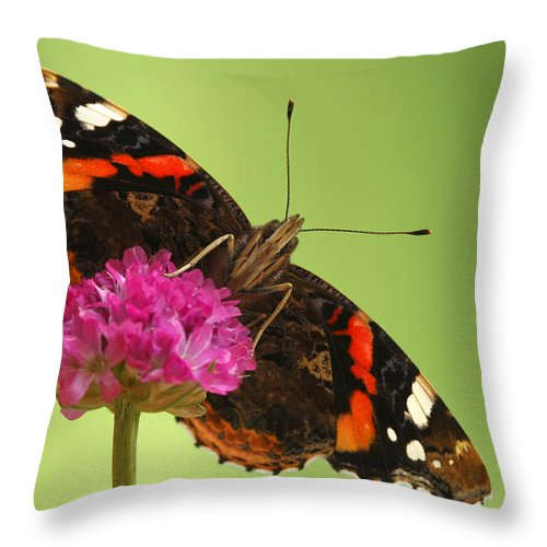 Fn Throw Pillow featuring the photograph Red Admiral Vanessa Atalanta by Silvia Reiche