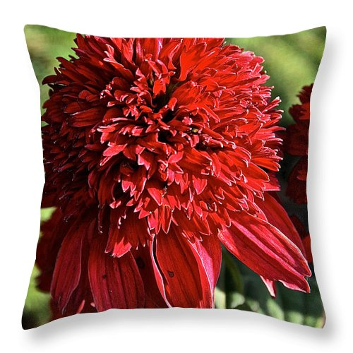Outdoors Throw Pillow featuring the photograph Red Blanket Flower Full Bloom by Susan Herber