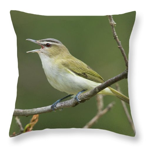 Mp Throw Pillow featuring the photograph Red-eyed Vireo Vireo Olivaceus Calling by Steve Gettle