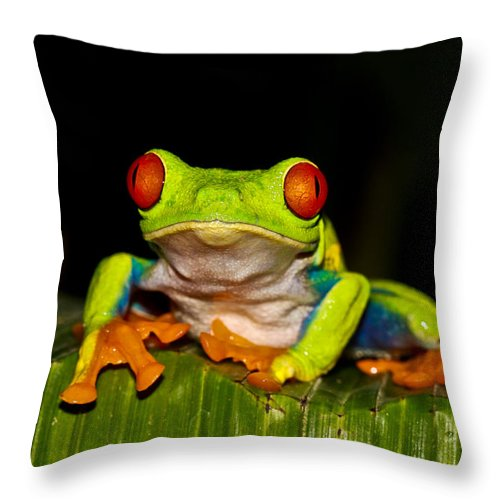 Frog Throw Pillow featuring the photograph Red Eyes 1 by Tom and Pat Cory