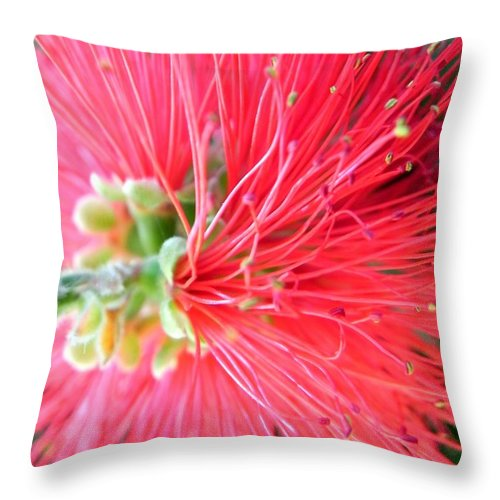 Red Throw Pillow featuring the photograph Red Feelers by Leah Moore