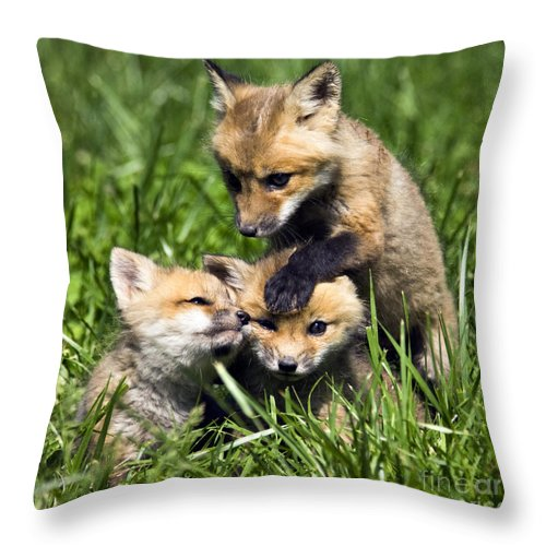Three Throw Pillow featuring the photograph Red Fox Babies - D006647 by Daniel Dempster