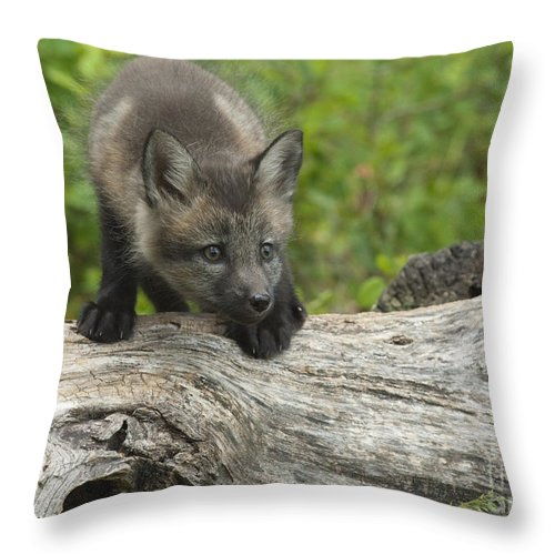 Bronstein Throw Pillow featuring the photograph Red Fox Kit by Sandra Bronstein