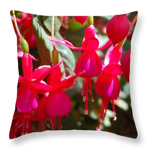 Flower Throw Pillow featuring the photograph Red Fuchsias by Amy Fose