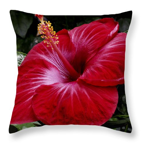 Red Throw Pillow featuring the photograph Red Hibiscus by Nancy Griswold