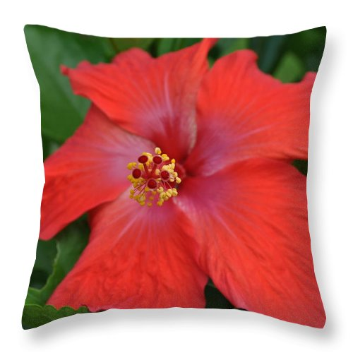 Hibiscus Throw Pillow featuring the photograph Red Hibiscus by Tiffney Heaning